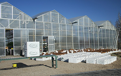Eastern Slopes Rangeland Seeds Ltd. Wholesale Greenhouse
